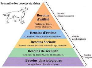 pyramide-des-besoins-canins