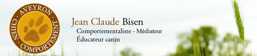 Aveyron Chien Comportement
